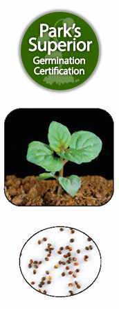Peppermint Seed Germination