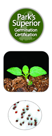 Spearmint Seed Germination