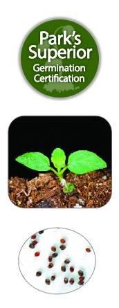 Spearmint Seed Germination