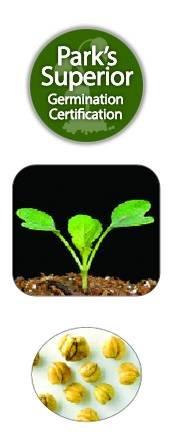 Mesclun Seed Germination