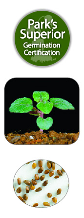 Bee Balm/Bergamot/Oswego Tea Seed Germination