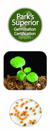 Watercress Seed Germination