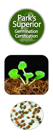Catnip Seed Germination