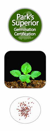 Oregano Seed Germination
