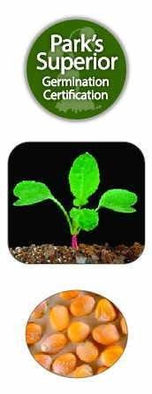 Radish Seed Germination