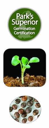 Sage Seed Germination