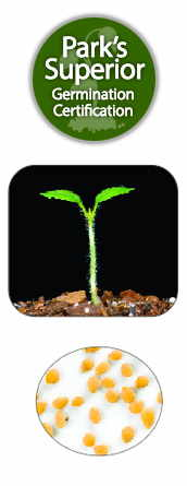 Potato Seed Germination