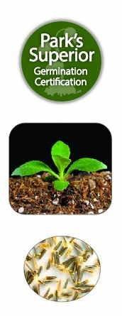 Stevia Seed Germination