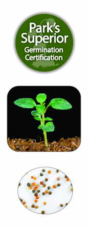 Mother of Thyme Seed Germination