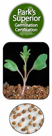 Brassica Seed Germination