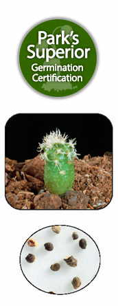 Cacti Seed Germination