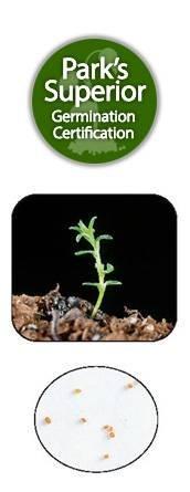Calluna Seed Germination