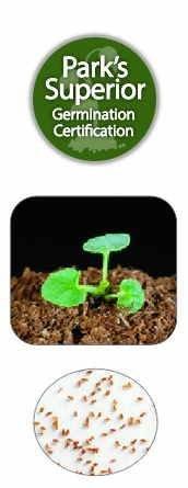 Campanula Seed Germination