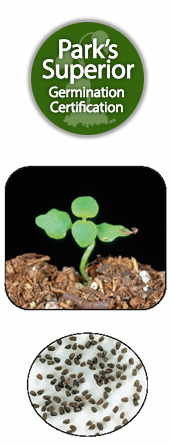 Chaenarrhinum Seed Germination