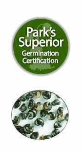 Cordyline Seed Germination