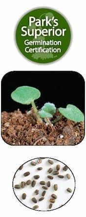 Agastache Seed Germination