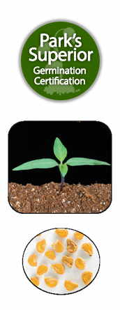 Datura Seed Germination