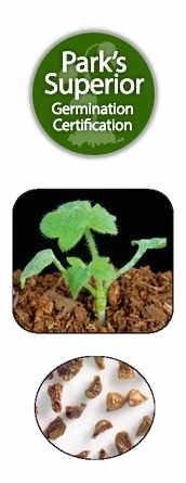 Delphinium Seed Germination