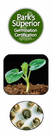 Alcea Seed Germination