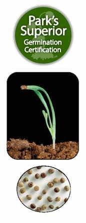 Eschscholzia Seed Germination