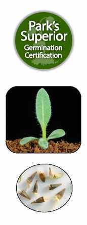 Gaillardia Seed Germination
