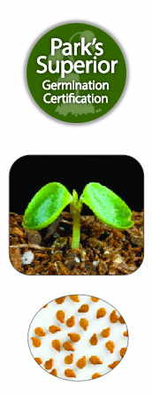 Impatiens Seed Germination