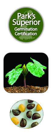 Ipomoea Seed Germination