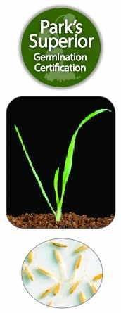 Lagurus Seed Germination