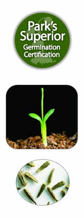 Liatris Seed Germination