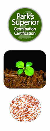 Lobelia Seed Germination