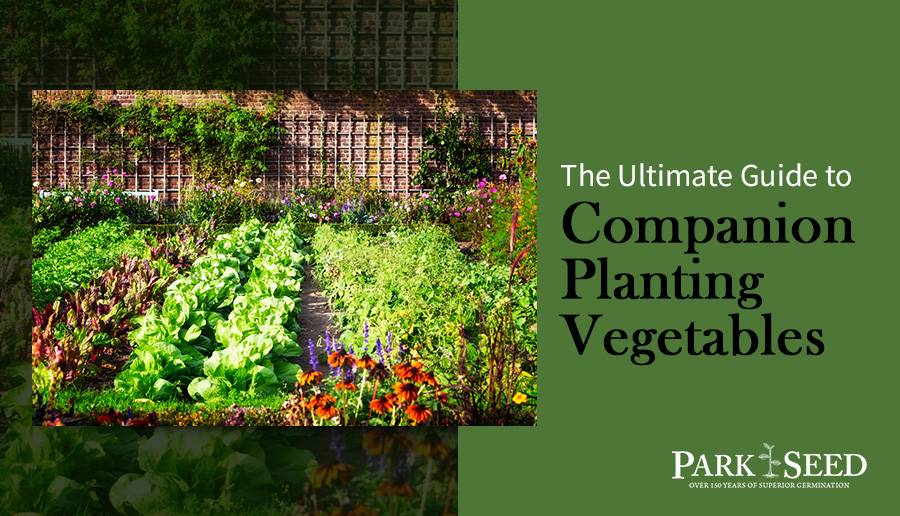 The Ultimate Guide to Companion Planting Vegetables