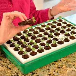 Beginner Gardening Bio Dome