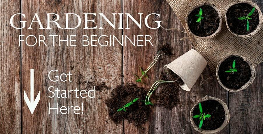 Beginnger Gardening