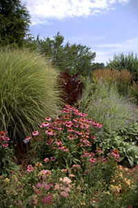 Butterfly Attracting Perennial Bed