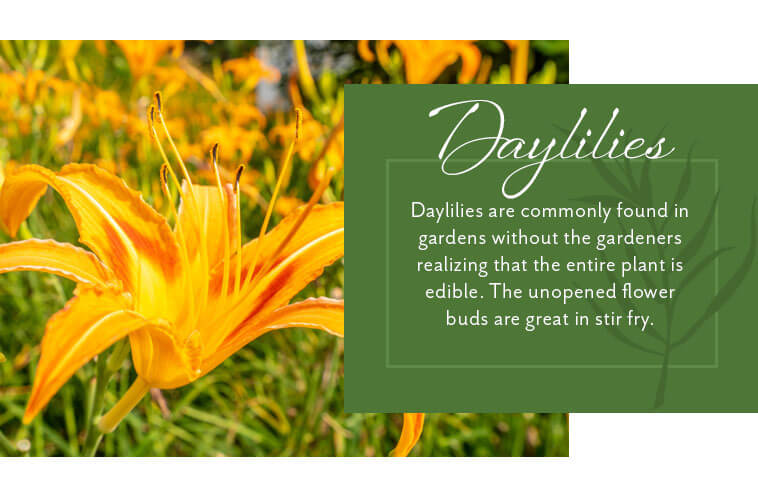daylilies are completely edible graphic
