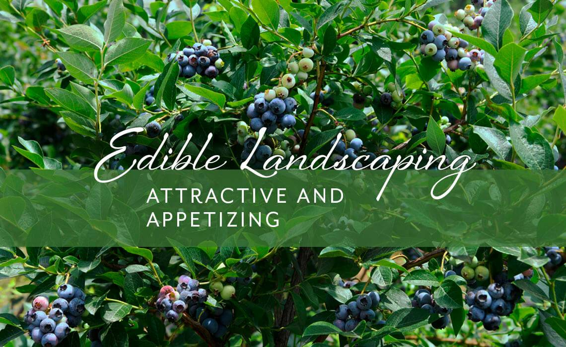 Edible Landscaping: Attractive and Appetizing