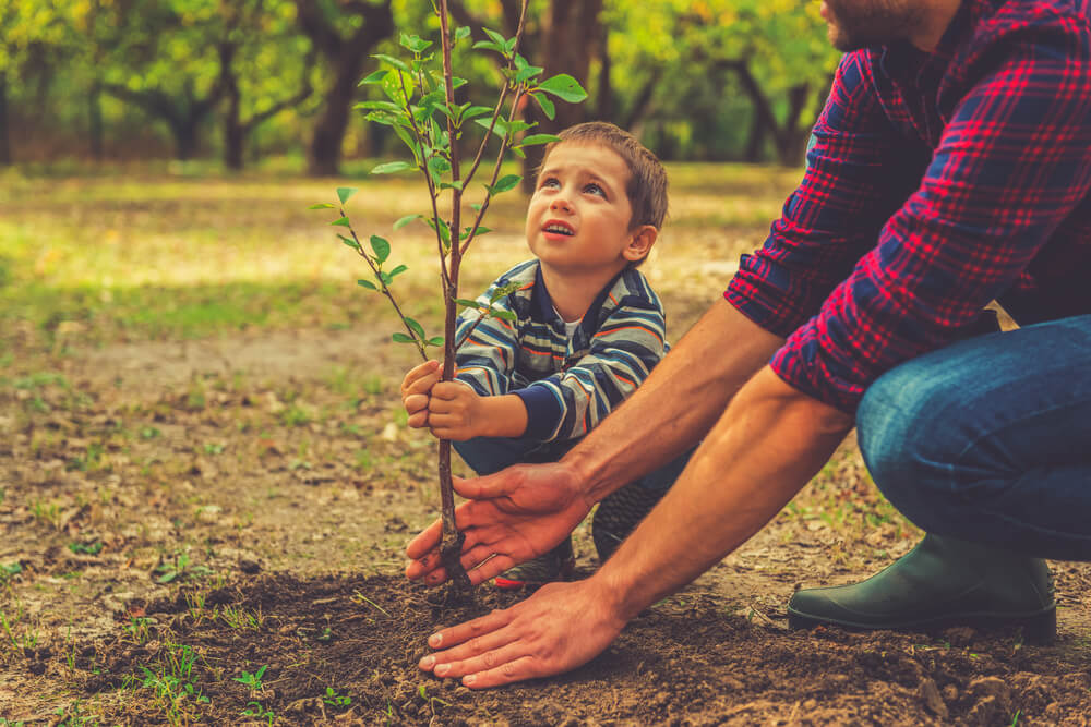 Father and son planting a tree