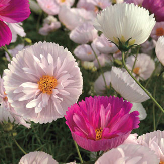 10 Must Have New Flowers image
