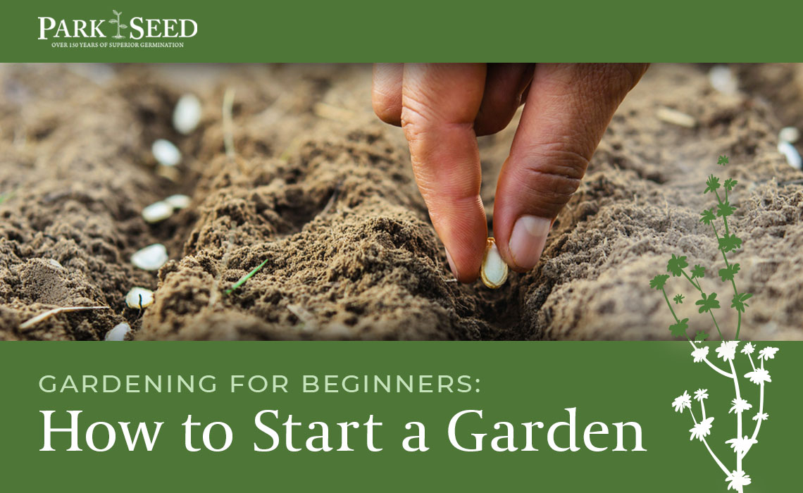Gardening for Beginners: How to Start a Garden