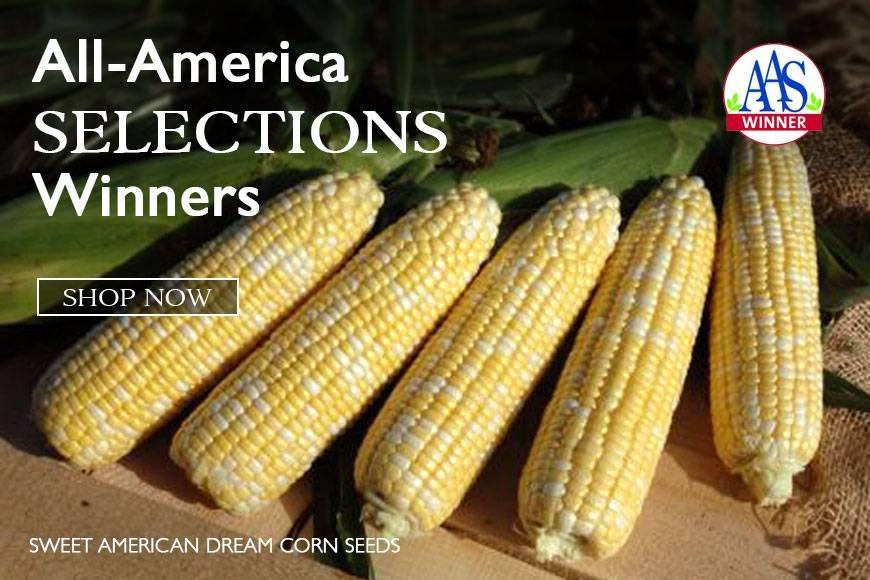 AAS Winners- superior new varieties