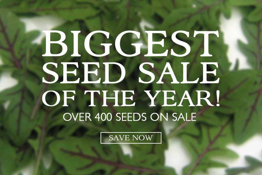 SEED SALE- over 400 seeds on sale