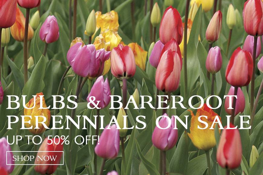 Save Today!- up to 50% off