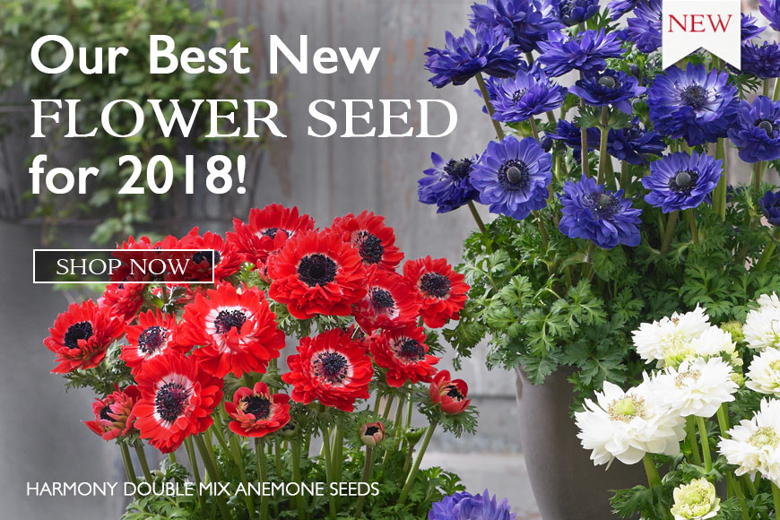 New Flowers- for 2018