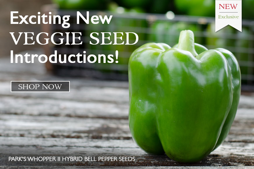 New Veggie- introductions