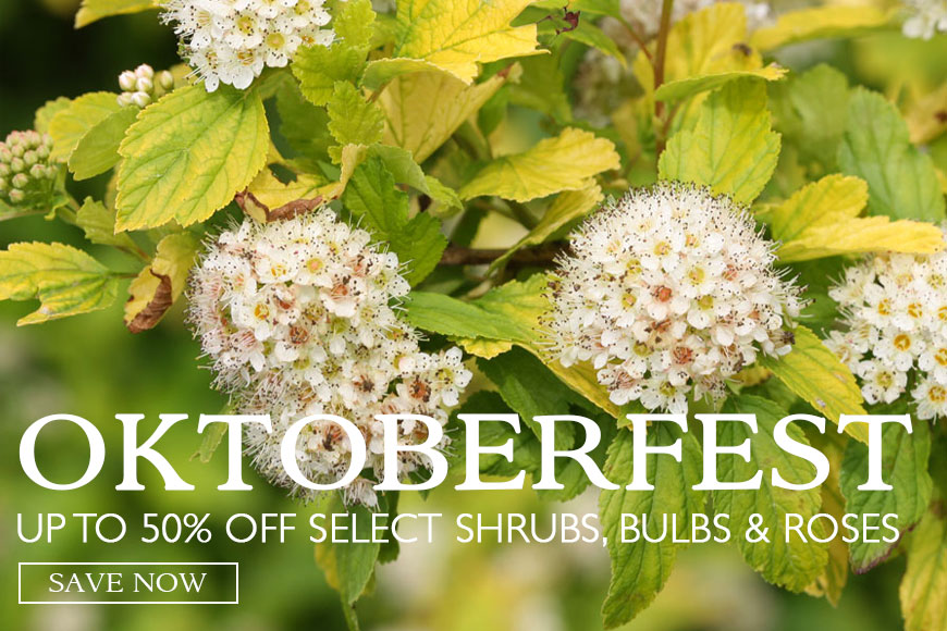 Oktoberfest Sale- up to 50% off