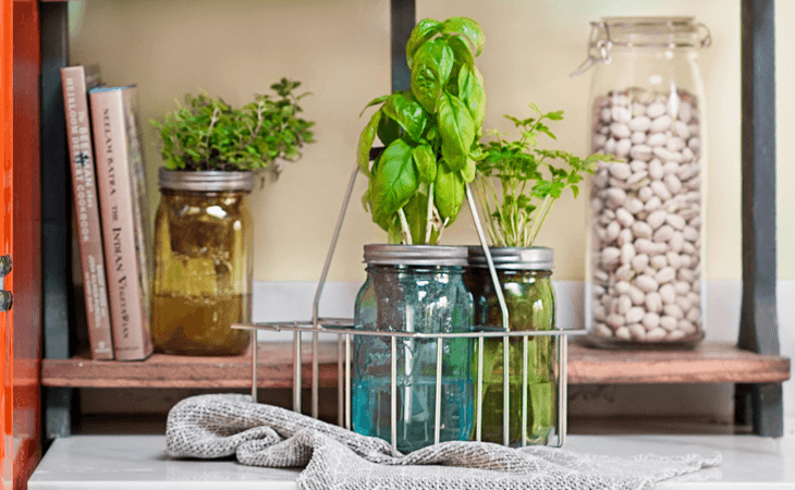 Growing Herbs on the Kitchen Counter