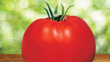 Park's Whopper CR Improved Tomato Seeds