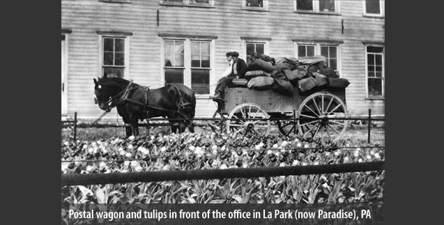 Postal wagon and tulips in front of the office in La Park (now Paradise), PA