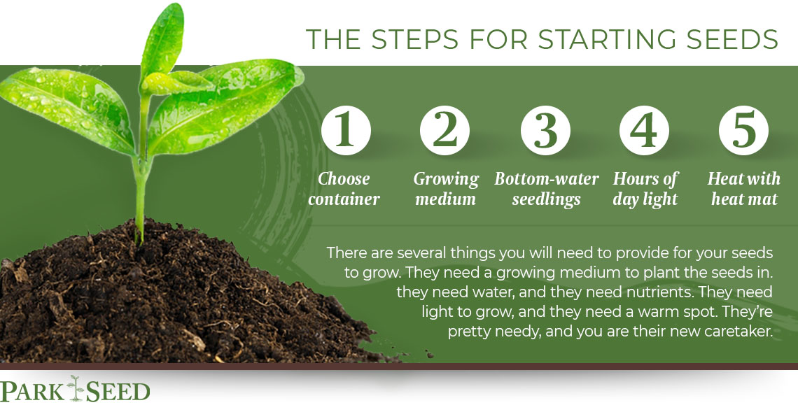 steps for startings seeds graphic