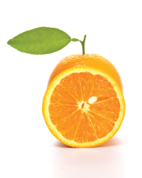 Image of Oranges